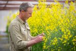 Weigh up canola Blackleg risk before sowing