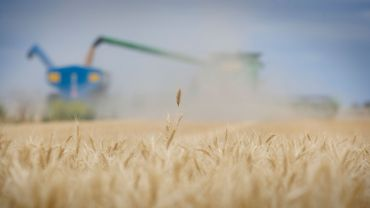 Above-average harvest a chance to reset business goals