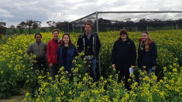 Risks and rewards of very early sown canola