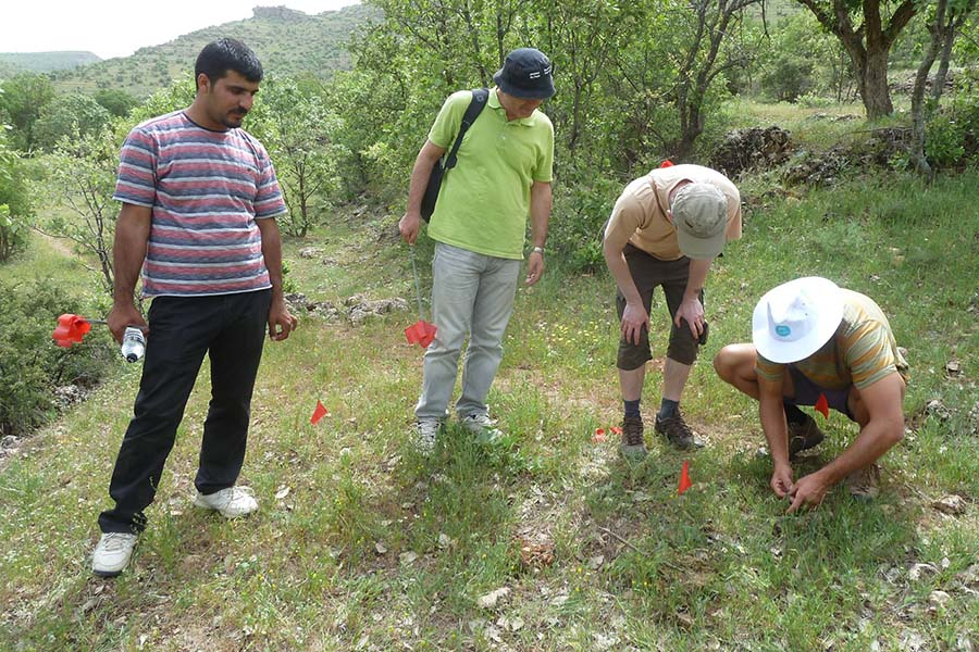 International collaboration is widening the world's collection of wild crop relatives. Here Bilal Aydin, left, of Harran University, Professor Cengiz Toker, of Akdeniz University, Dr Petr Smykal, of Olomouc University, and Dr Jens Berger, of CSIRO, are surveying populations of Cicer reticulatum - the wild progenitor of domestic chickpea - in Turkey's south-eastern Anatolia region.