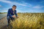 Researchers refine tactics to slow feathertop Rhodes grass spread