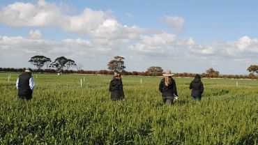 Call for grain sector stakeholders to help extend valuable frost R&D information
