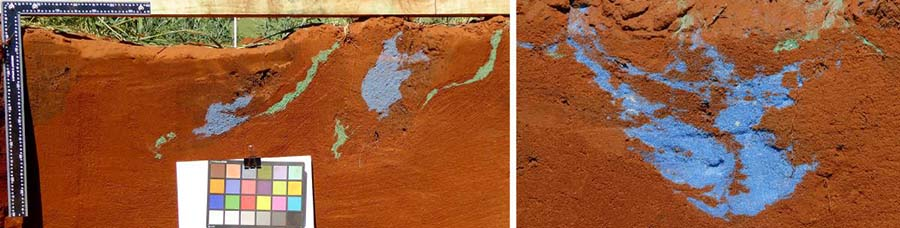 Soil profile images showing redistribution of blue sand buried at zero to 10cm and green sand at 20 to 30cm as a result of tillage by a mouldboard plough (left) and a spade on a rotary spader (right) over the same soil depth.