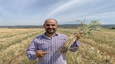 Designer root systems to maintain durum wheat yields in drought