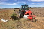 Amendment options to overcome soil constraints in heavy-textured Western Australian soils