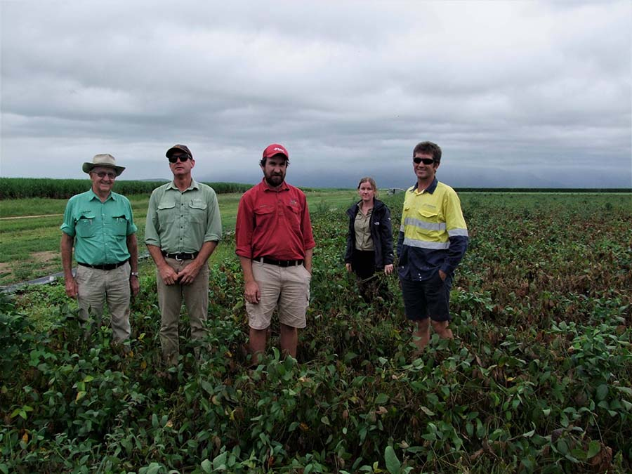 Queensland Department of Agriculture and Fisheries staff travelled to north Queensland to see what was occurring in soybean crops.