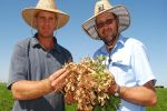 Could peanuts hit the sweet spot for north Queensland sugarcane growers?
