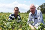 Crop varieties, protection tactics and marketing options raised as key issues by NSW growers