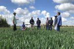 WA grower tour focus on trans-Tasman high yielding crops