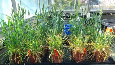 Lipid composition clue to frost tolerance
