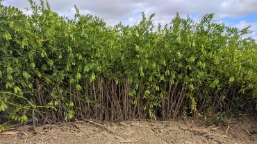 Legumes a winner for Wimmera farming family