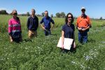 Overcoming phosphorus stress in south-eastern Australia