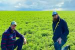 Chemical residue adds layer of complexity to legume production