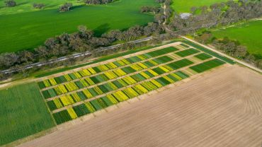 Multi-pronged trials road test intercropping