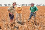 Super-high-oleic safflower outperforms canola at Quandialla, New South Wales
