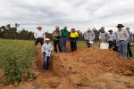 Amelioration of subsoil acidity in south-eastern Australia explored