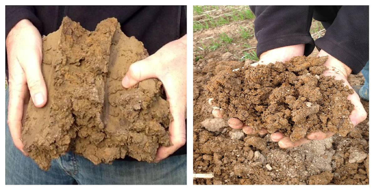 Figure 4: Application of nutrient-enriched organic matter on a soil at Ballan, Victoria (a) before and (b) three years after treatment.