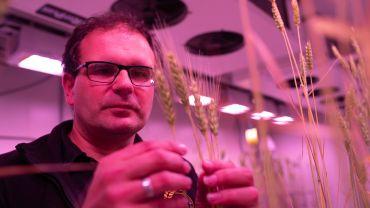 Lab-to-paddock technology raises wheat breeding bar