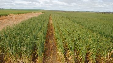 Sensing advances to lift crop trials to a new level
