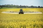 NSW growers on disease alert this year