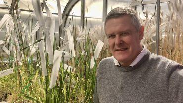 Genetic secrets of leading wheat varieties revealed