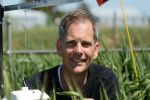 Remote-sensing tools offer prospect of identifying frost-affected crop areas
