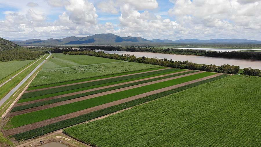 The peanut trial in the Burdekin aims to help quantify legumes' sustainability and profitability. PHOTO Marcus Bulstrode