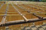 Webinar season stimulating demand for Australian grains in Asia