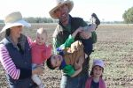 Dual-purpose crops deliver options for Toobeah growers in SW Queensland