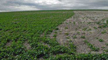 Improving crop establishment in non-wetting soil