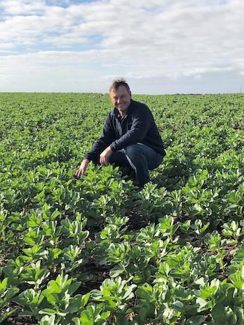 Andrew Hansen in a crop of faba beans.