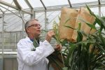 QLD research makes breakthrough in boosting sorghum protein content