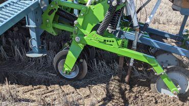 Ground-truthing long coleoptile wheats