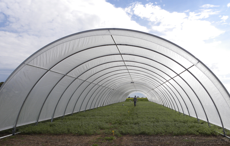 Trials inside a tunnel to simulate drought conditions.