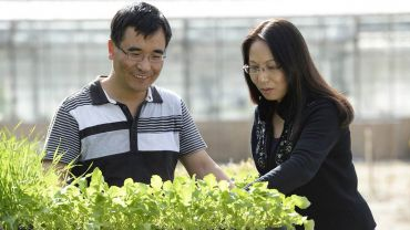 Researchers find key herbicide resistance gene