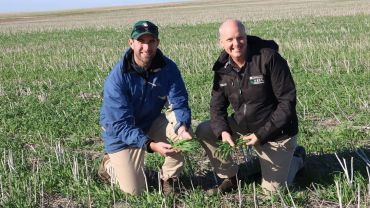 Grower project confirms widespread fungicide resistance to net blotch in southern WA